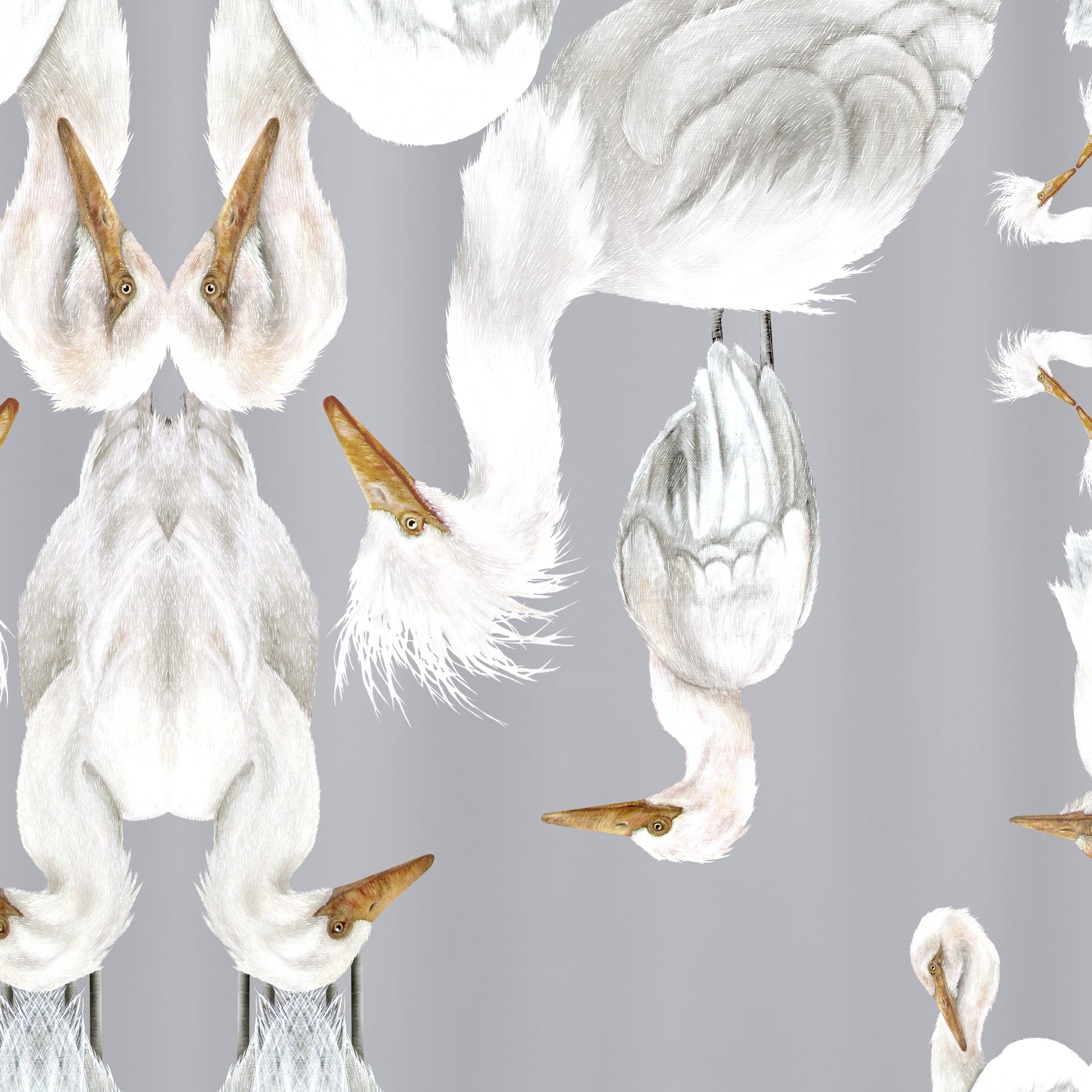 SILVER PLUMES