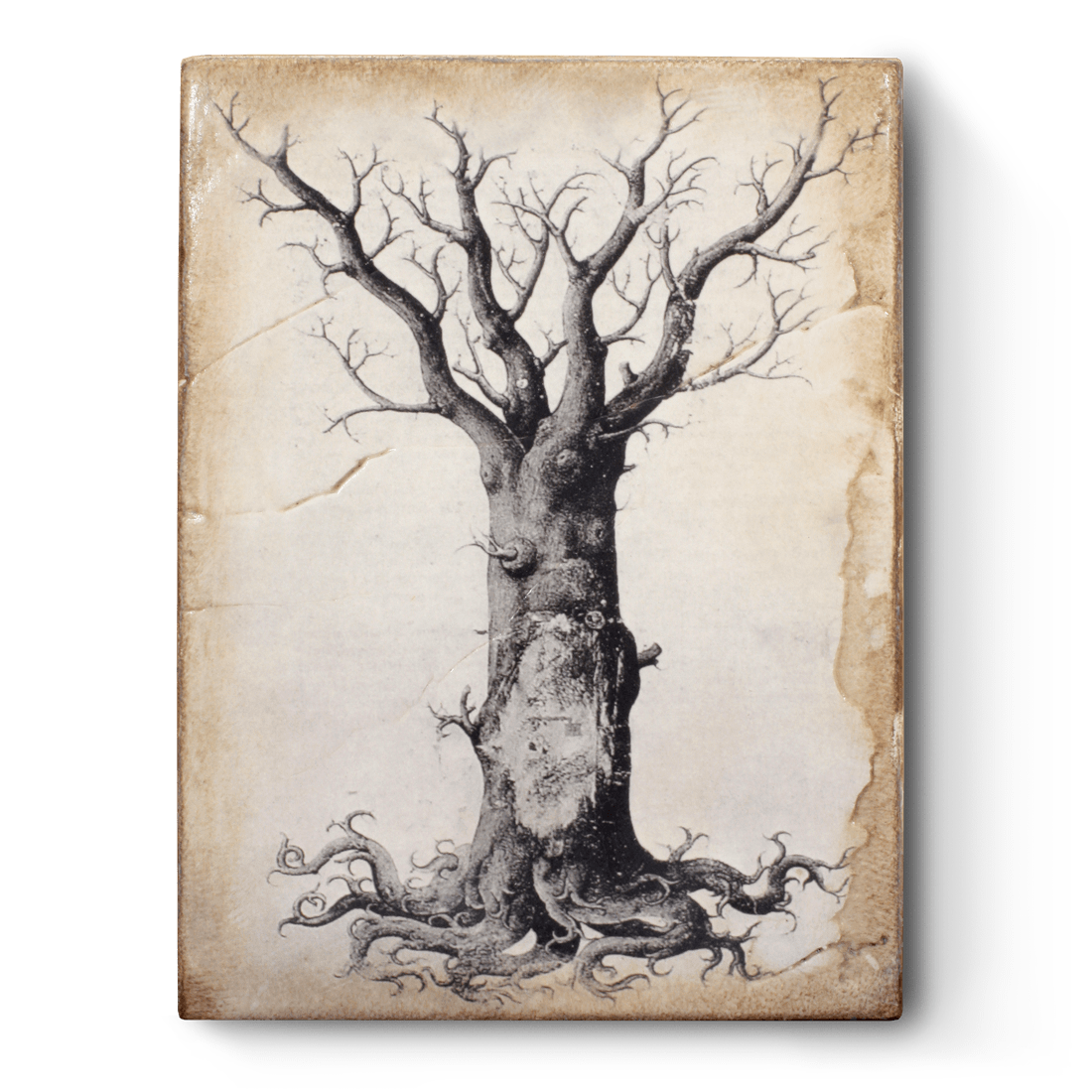 T125 - Medieval Tree of Life - Memory Block Sid Dickens